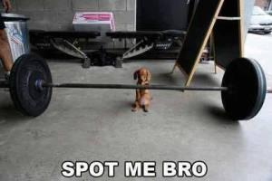 spot me